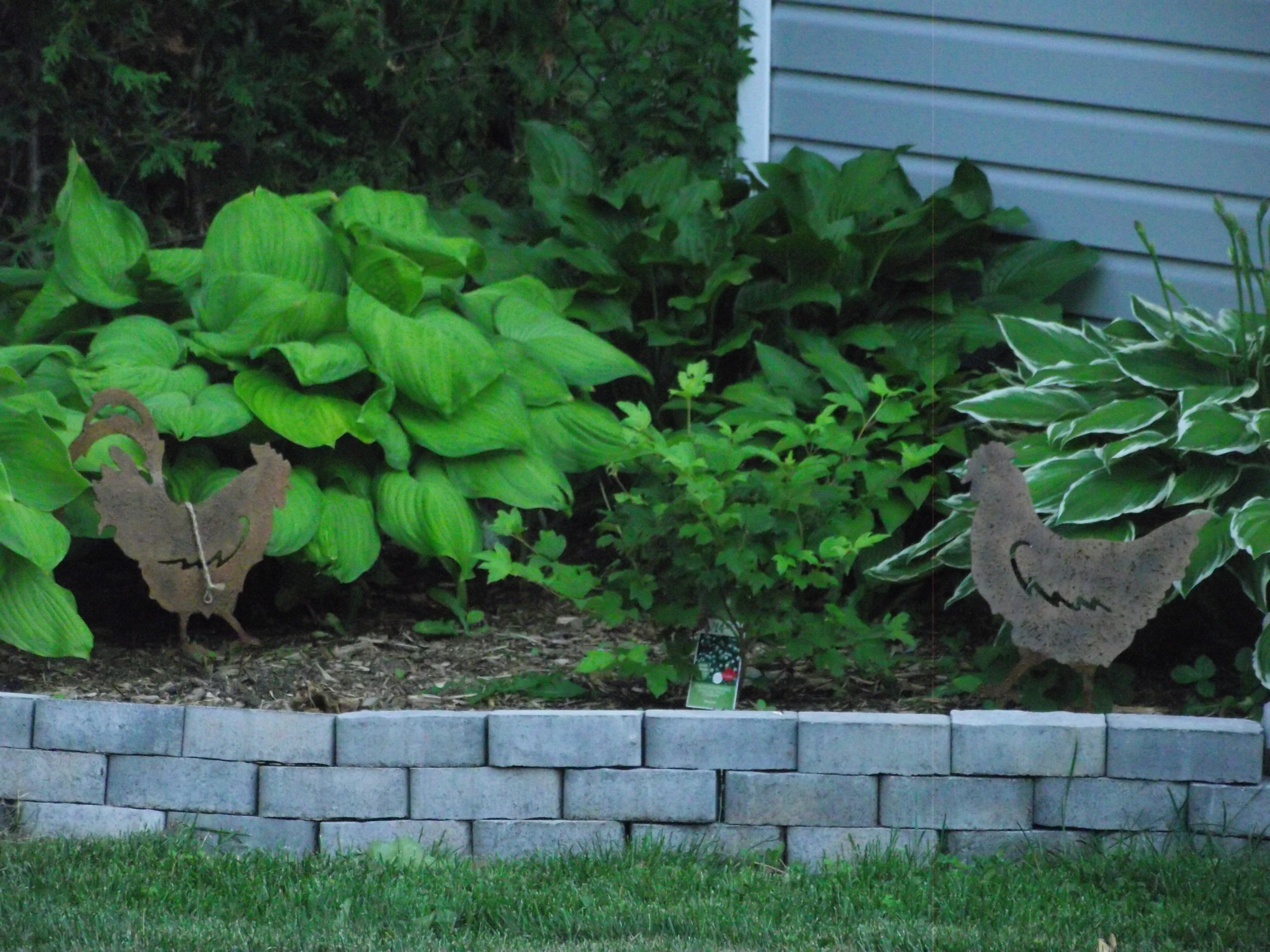 Backyard 2016-07-04 20.10 (33)